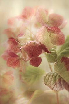 zachte kleuren pink flowers, color, soft pink, pastel pink, vintage floral, hydrangea, dusty rose, garden, little flowers