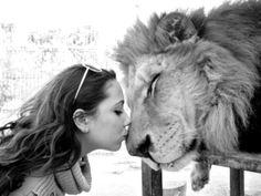 <3 Lion Love