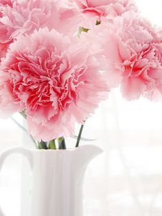 pink carnations...