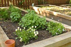 Diy ~ How to build raised garden beds