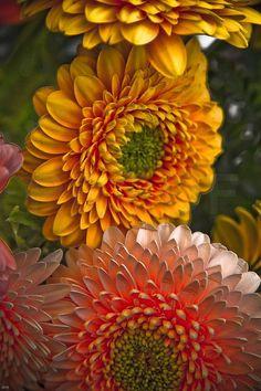 Fresh Farmhouse: Farmer's Almanac ~ September's flower is the aster, which represents love.