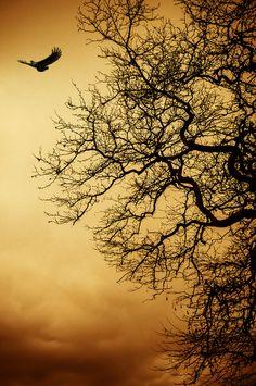 silhouett, wing, athens greece, sky, roots, art, evangelo tsigarida, trees, hawk