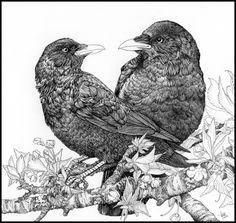 Lovecrows in ink by LisaCrowBurke on deviantART - Ink