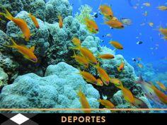 Foto submarina de Francesc Rovira.