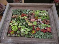 Succulent pic frame