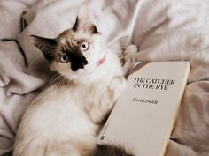 The Catcher in the Rye #LiteraryCat