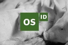 Os ID – identitetsde