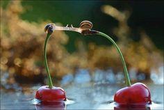 the kiss, snail
