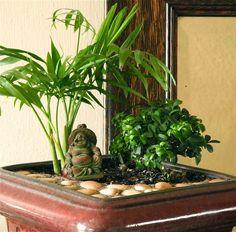 Miniature Meditation Garden #miniaturegarden