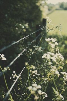 field, vintage lighting, wildflower, vintage flower photography, vintage photography nature, fences, little flowers, life quot, photographi