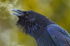 Raven's Breath by junctionbutte, via 500px