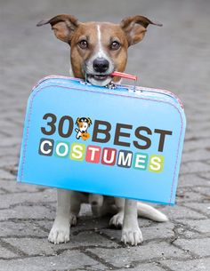 30 Best Costumes for Dogs. Ahahaha!! Sooo Cute!! Gotta Be ONE In That Suitcase For YOU Pud!!