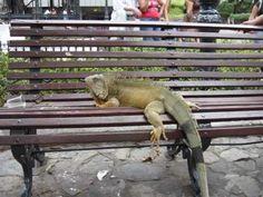 GUAYAQUIL, CIUDAD DE ENCANTO #guayaquil #ecuador