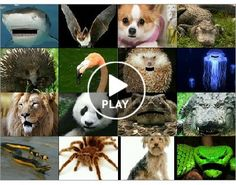 Face Talker - Animal Book Reports…This is a free app….looks like a fun project to do!