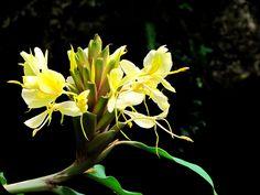 BEHOLD THE METATRON: Puerto Rico: Hiking El Yunque Rainforest