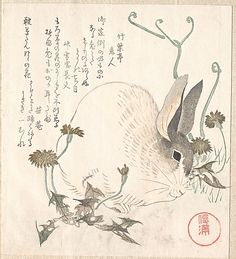 Hare and Dandelion?