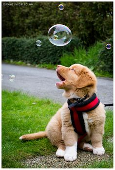 Take pictures with a dog, and bubbles (: