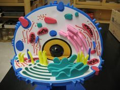 Animal Cell 3d Model Project With Labels Picture