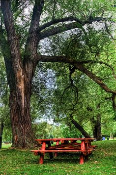 Picnic table under a shade tree.