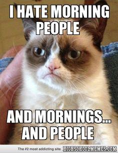 frozen funni, grumpi cat, happi cat, funni odd, funni joke, funni stuffi, grumpy cats