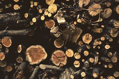 woods circles, photographi inspir, camp, cut wood, stack wood, wood textur, tree, natur, awesom