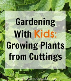 Gardening with Kids: Growing Plants from Cuttings