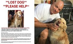 Couple reunited with golden retriever after being lost for 2 years coupl reunit, golden retrievers