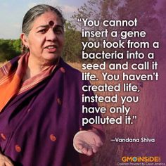 Vandana Shiva of Seed Freedom speaks the truth! Contamination of non-GMO crops and a loss of biodiversity have become an epidemic. #StopMonsanto #RightToKnow #GMOs #SaveOurSeeds #SaveTheBees
