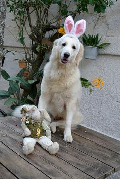 Easter dog  #dogs #animals #pets #love