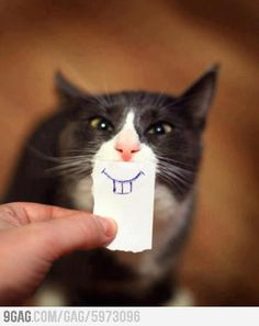 happy faces, silly cats, funny stories, funny cats, funni