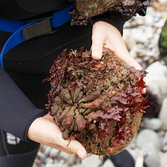 On the Pacific coast, dare to dive for abalone | Sunset.com