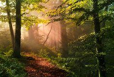 Early Autumn, Robin Halioua