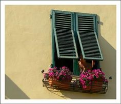 | ? | Late afternoon in Lucca, Tuscany | by © jolivillage