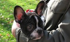 10 Signs You're a Responsible Pet Parent
