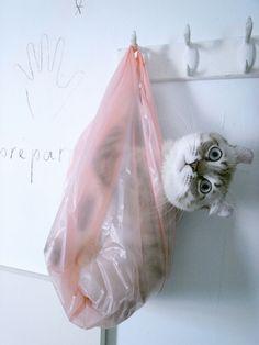 to-go bag...#kitten #cat #animal