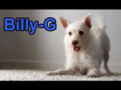 Dog rescue from Downtown L.A - Billy-G