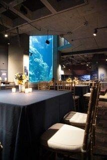 Great Ocean Tank Gallery tank galleri, ocean tank, aquarium event