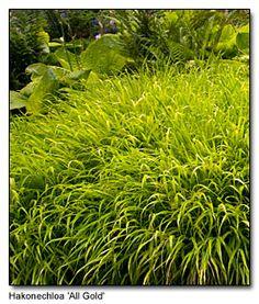 Pacific Northwest garden writers: Top Ten plant lists