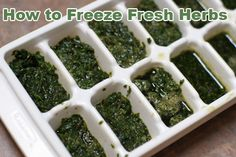 How to Freeze Fresh Herbs - perfect for extra herbs from the garden! | 5DollarDinners.com