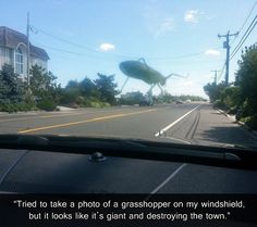 laugh, giant grasshopp, landscape photos, funny pictures, funni, bug, school buses, humor, forced perspective