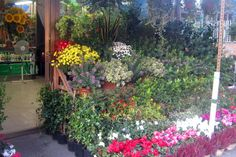 Flowers Make Us Happy