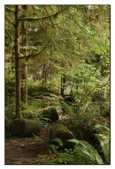 rainforest trail, Cascade Falls, Quinault Recreation Area, Olympic Peninsula, WA