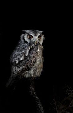 ✯ Owl! by Sue Demetriou✯