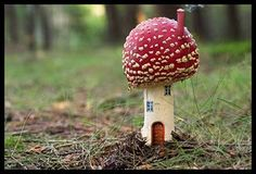"""~ when I drink from the """"Drink Me"""" bottle I will live in this tiny little mushroom house ~"""
