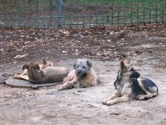 Requirements on doggie daycare
