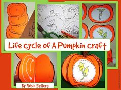 Fall Life Cycle of a Pumpkin Craft for Fall Activities from Sweet Tea Classroom