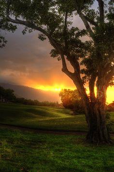 pictur, tree, sunset, sunris, natur, beauti, place, peac, god creation