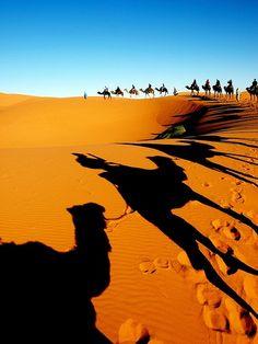 Riding camels in a caravan! Erg Chebbi Western Sahara desert. Morocco