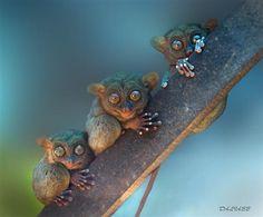 """Tarsirs ~ Miks' Pics """"Animals lll"""" board @ http://www.pinterest.com/msmgish/animals-lll/"""