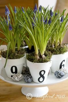 Small painted and numbered terracotta pots are perfect accessories for decorating. www.songbirdblog.com